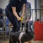 McLennan County Jr Livestock Show pigs
