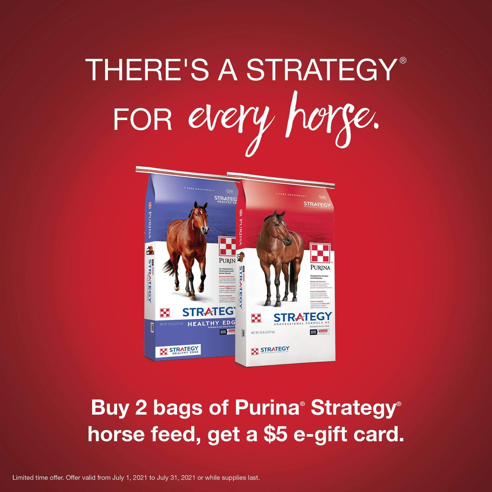 purina horse feed strategy feed greatness healthy edge